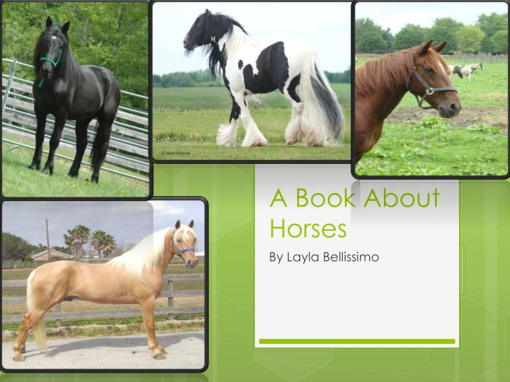 a book about horses n.