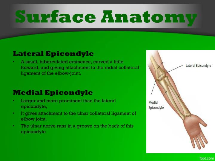 Ppt Elbow Joint Powerpoint Presentation Id2086577