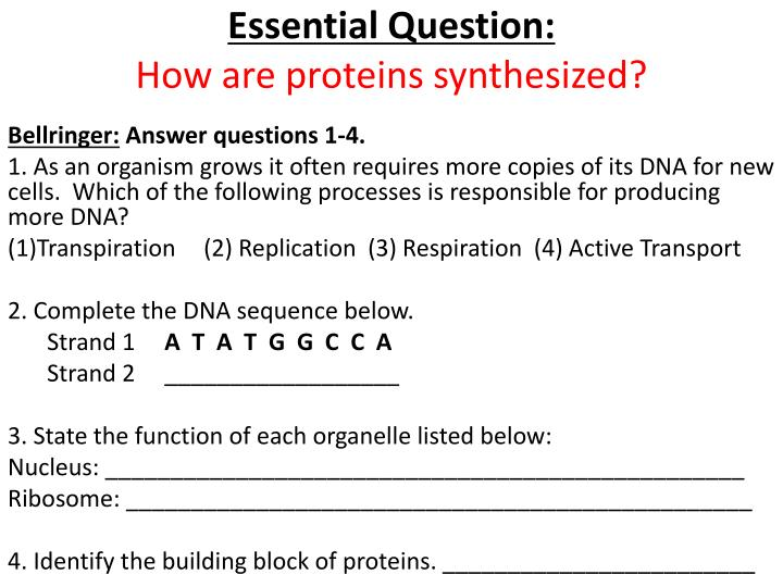 essential question how are proteins synthesized n.