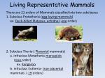 living representative mammals