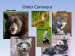 order carnivora1