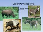 order perrisodactyla1