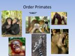 order primates1
