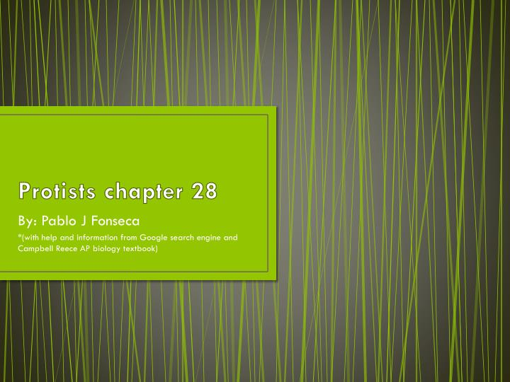 protists chapter 28 n.