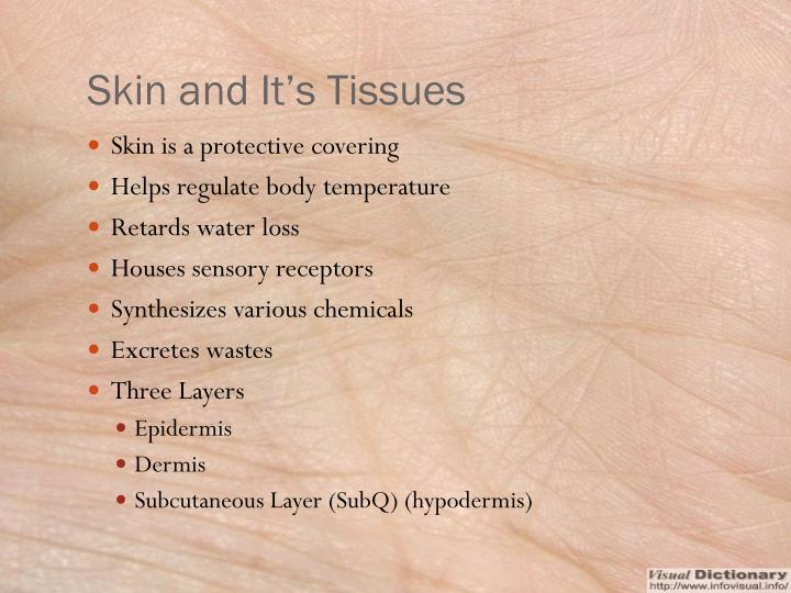 Skin and It's Tissues