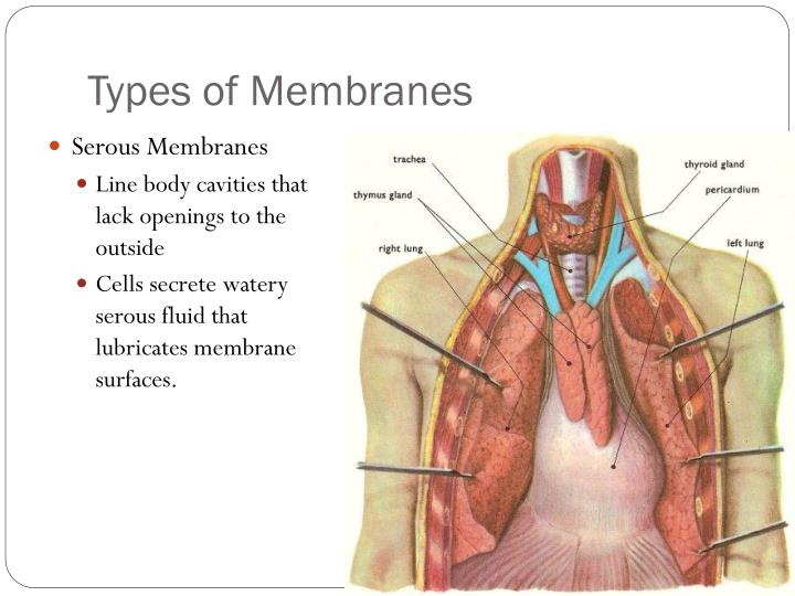 Types of Membranes