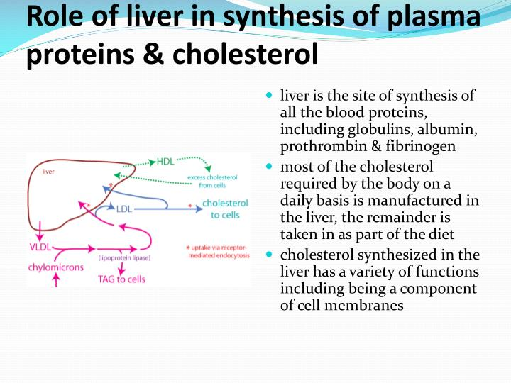 Ppt H4 Functions Of The Liver Powerpoint Presentation Id2087121