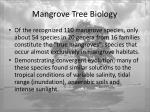mangrove tree biology