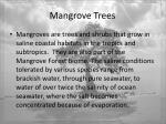 mangrove trees2