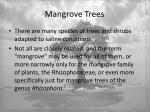 mangrove trees3