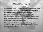 mangrove trees4