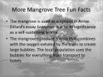 more mangrove tree fun facts