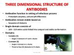 three dimensional structure of antibodies