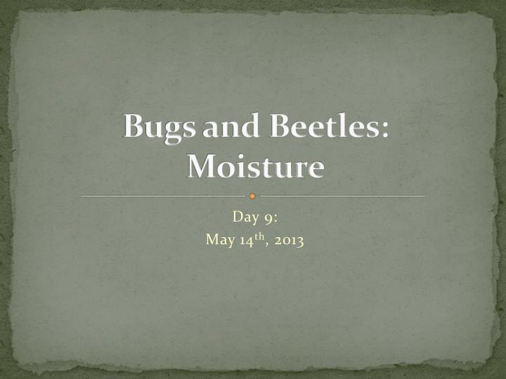 bugs and beetles moisture n.
