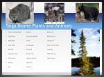 taiga biome plants and animals