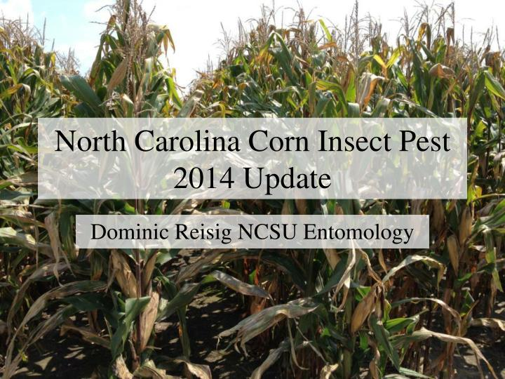 north carolina corn insect pest 2014 update n.