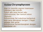kelas chrysophyceae