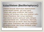 kelas diatom bacillariophycae