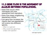 11 3 gene flow is the movement of alleles between populations