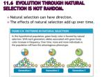 11 6 evolution through natural selection is not random