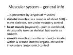 muscular system general info1