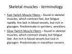 skeletal muscles terminology2