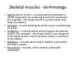 skeletal muscles terminology3