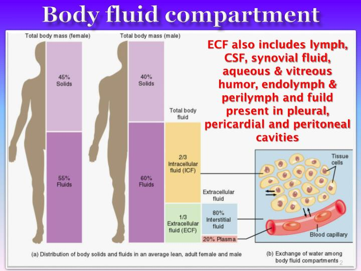 what balance fluids in the body