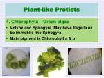 plant like protists3