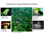 smithsonian tropical research institute3