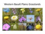 western basalt plains grasslands1