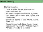 muscle summary1