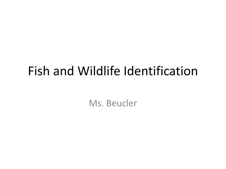 fish and wildlife identification n.