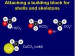 attacking a building block for shells and skeletons