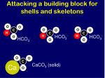 attacking a building block for shells and skeletons1