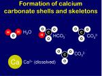 formation of calcium carbonate shells and skeletons