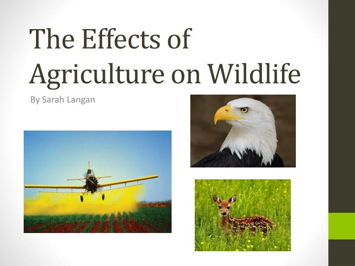 the effects of agriculture on wildlife n.
