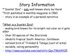 story information