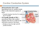 cardiac conduction system2
