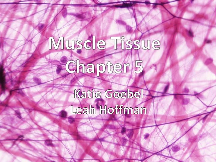 muscle tissue chapter 5 n.