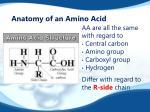 anatomy of an amino acid