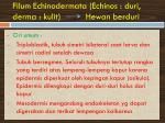 filum echinodermata echinos duri derma kulit hewan berduri