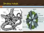 struktur tubuh3