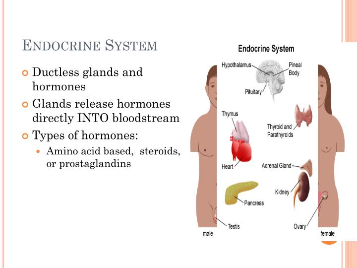 Ppt Chapter 9 Endocrine System Powerpoint Presentation Id2090348