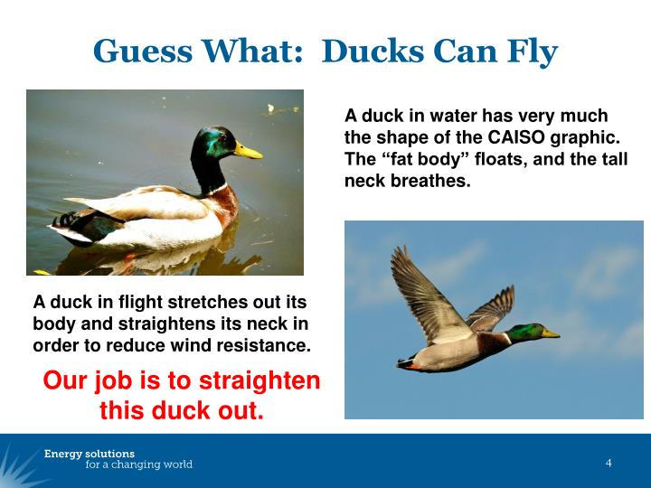 Guess What:  Ducks Can Fly