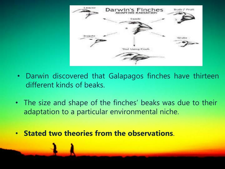 Darwin discovered that Galapagos finches have thirteen different kinds of beaks.
