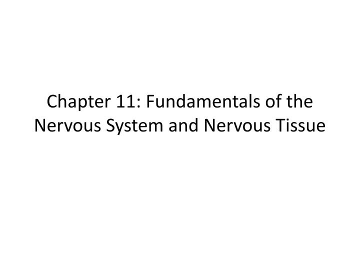 chapter 11 fundamentals of the nervous system and nervous tissue n.