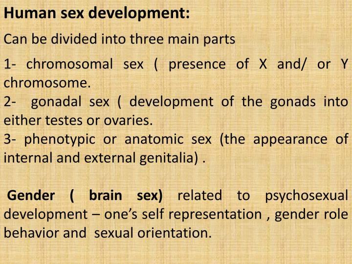 Human sex development: