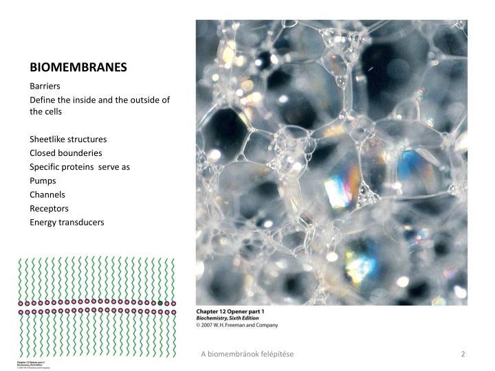 Biomembranes1