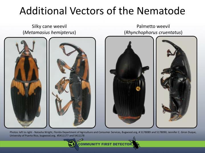 Additional Vectors of the Nematode